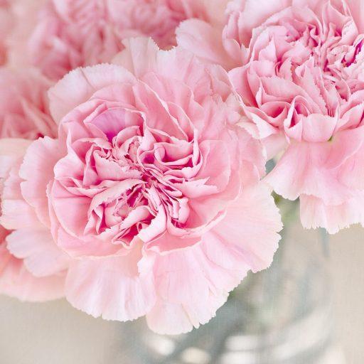 cropped-flowers-1325012_1280.jpg